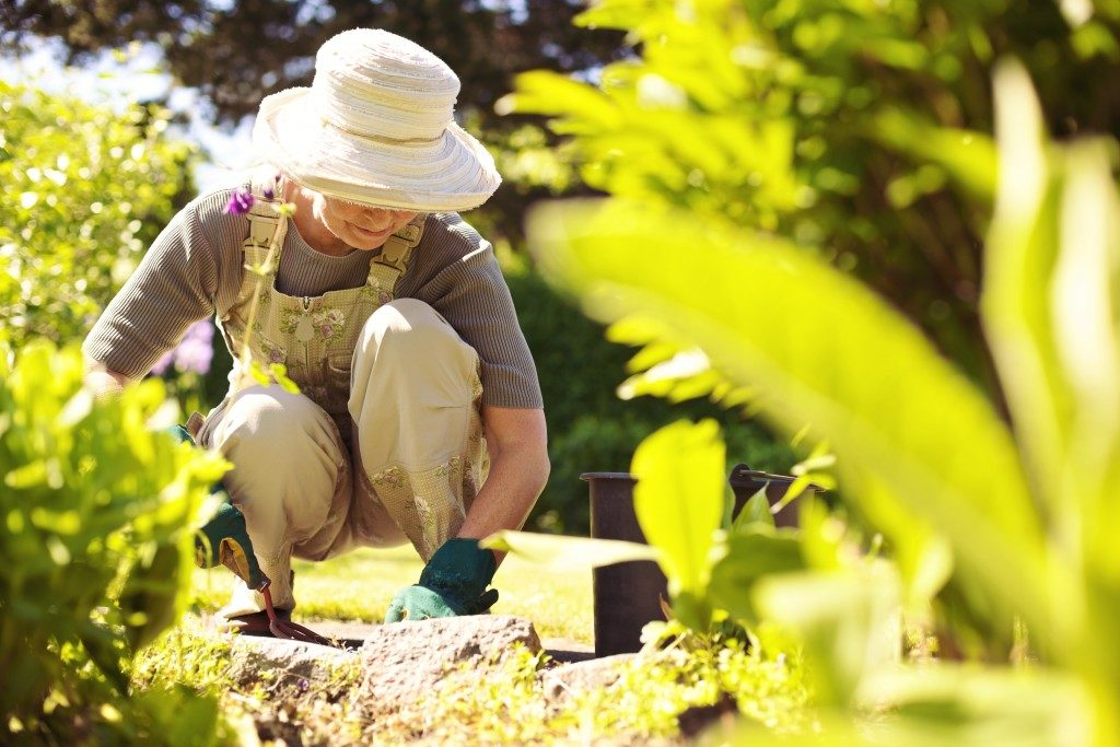 senior tending the garden