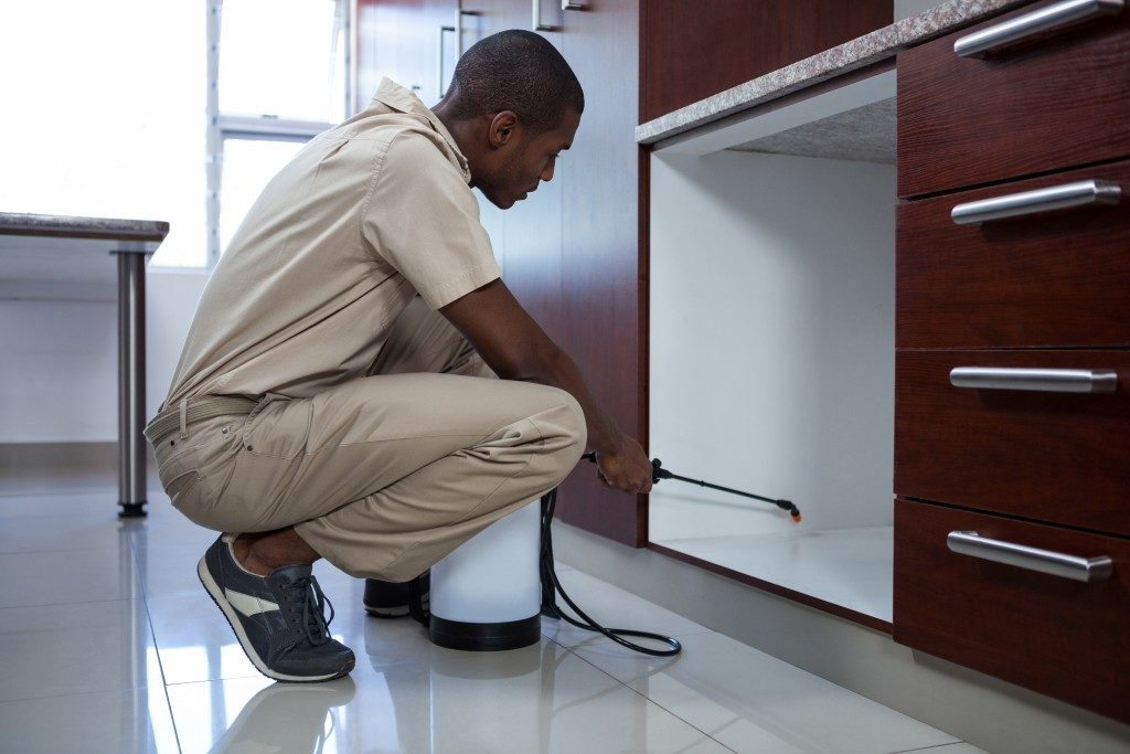 Man spraying chemicals on cabinets for pest control