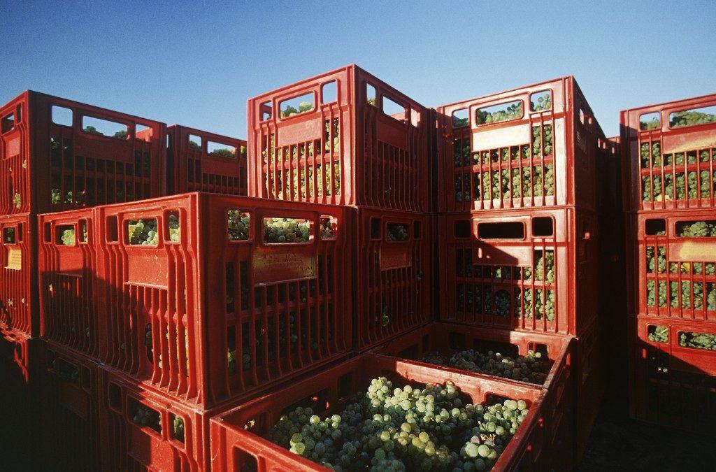 Storage bins for fruit harvest