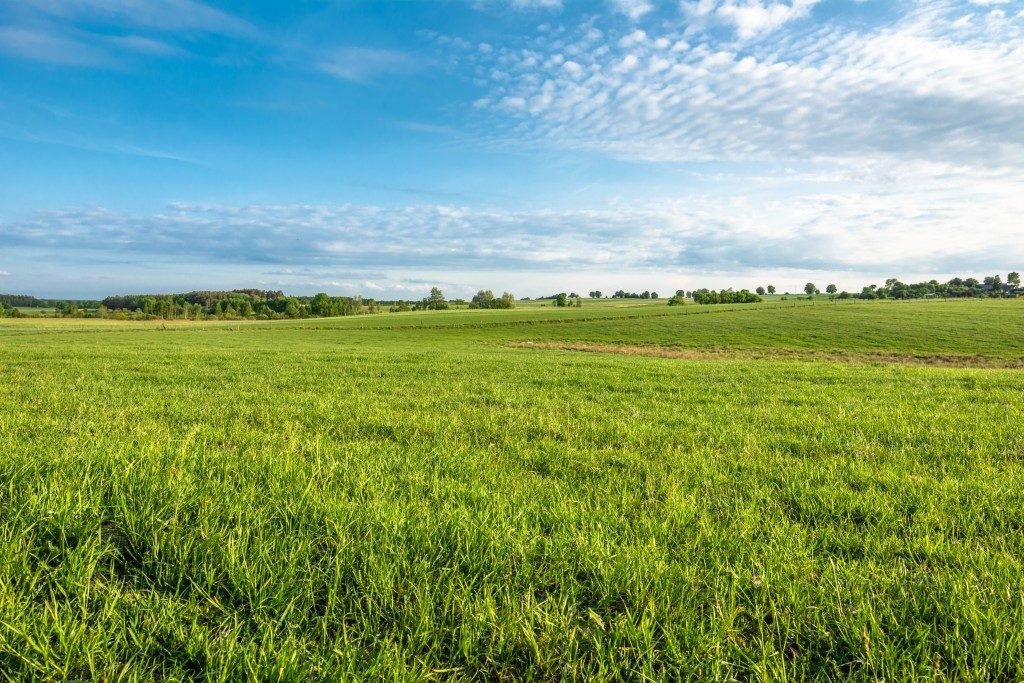wide view shot of a farmland