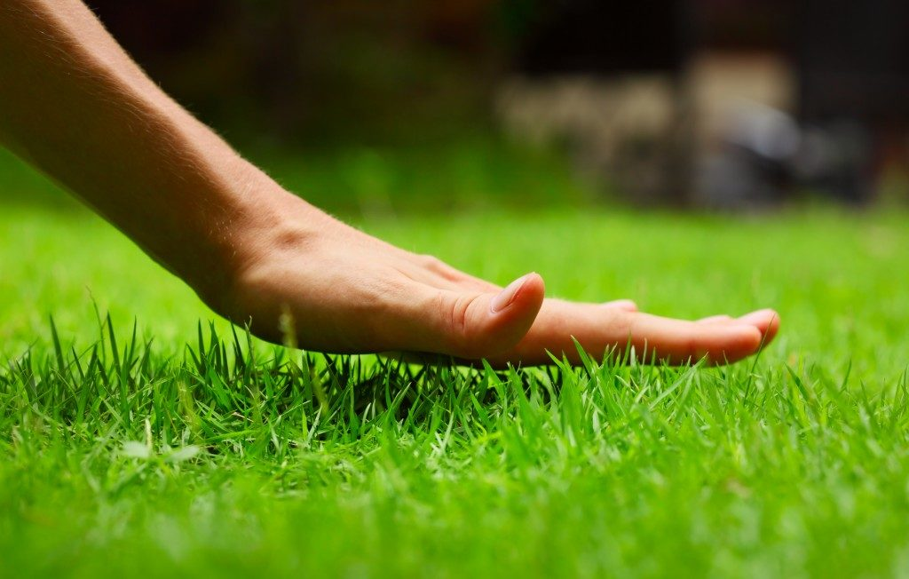 touching the grass