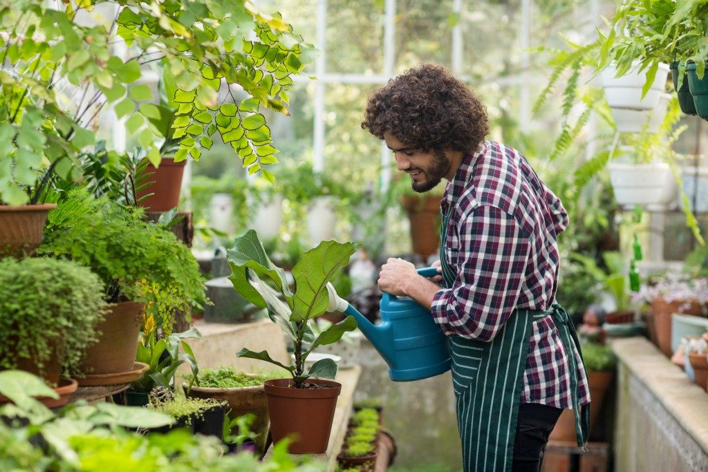 man watering his plants inside a greenhouse