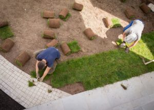 Gardener installing grass turf
