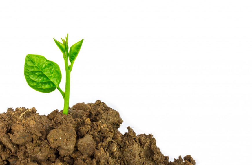Green Business Ideas to Help Save the Planet